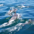 Sailing with Dolphins in San Diego