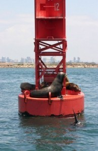 sailing with sea lions in san diego